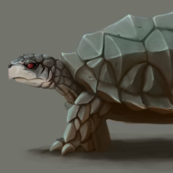 A quick study of a turtles body